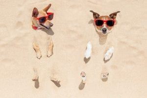 dogs-in-the-sand